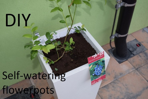 Self-watering flower pots DIY-1.jpg