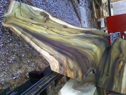 5 ft  dia hollow tulip poplar - woodworking talk