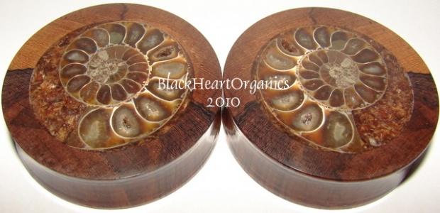 Ammonite Fossil Inlay-dsc00016.jpg