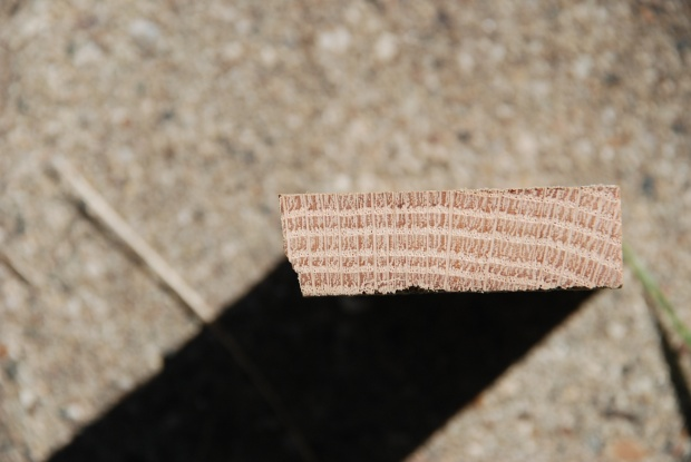 Cottonwood?-dsc_0230.jpg