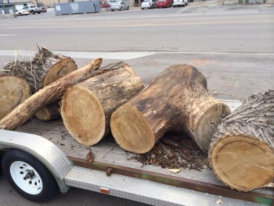 Free wood - what should i take?-image-2874887939.jpg