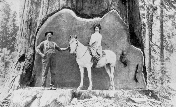 Logging, 1860's Pic's - Woodworking Talk - Woodworkers Forum