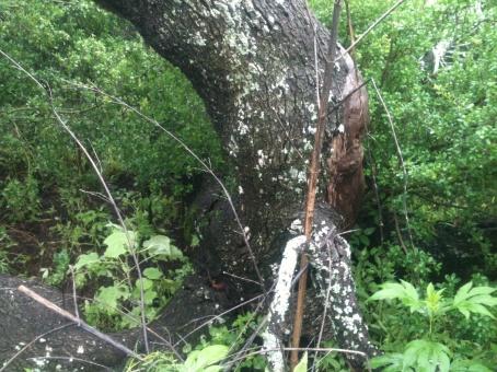 Name: Lumberjack in the rain 016.jpgViews: 207Size: 105.8 KB