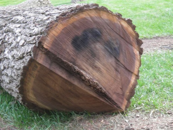 What do you pay for logs?-mosely-metal-stained-butt-log.jpg
