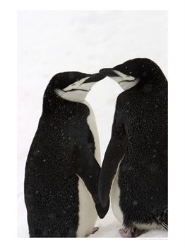 Name:  penguins.jpg