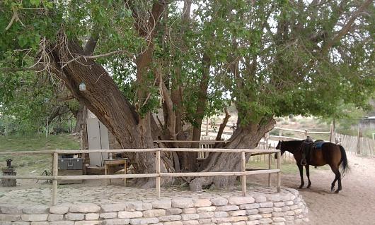 name this tree-photo0135.jpg
