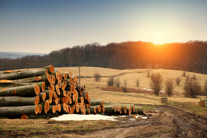 What You Should Know About Sustainable Wood  WoodworkingTalk.com