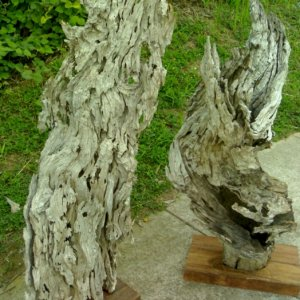 exotic Molave driftwood projects