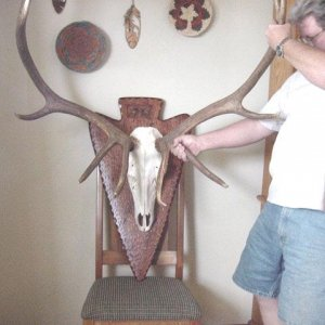 European mount Elk horns with Arrow shaped plaque. The Six point Elk was taken with a compound bow.