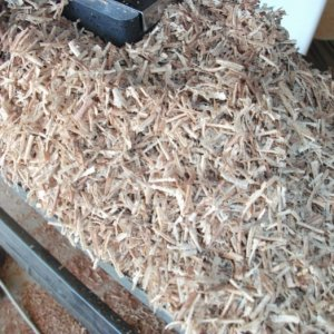 new planer test willow knot shavings