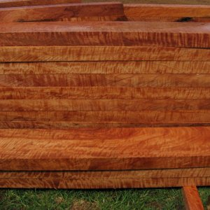 Queensland Maple - 8''x2'' boards Extreme Figure