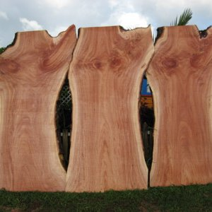 "Queensland Maple Slabs 120""long x 48"" wide x 2"" thick"